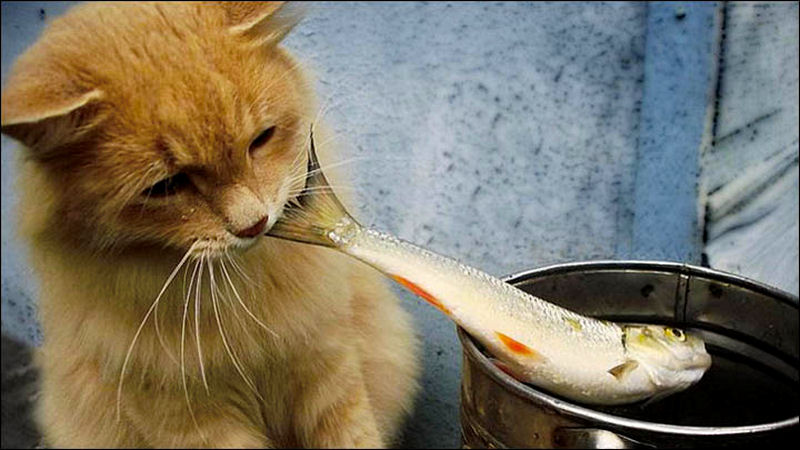 9 foods your cat should never eat page 9 of 10 the for Can cats eat raw fish