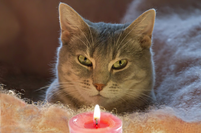 are scented candle fumes toxic to cats the purrington post. Black Bedroom Furniture Sets. Home Design Ideas