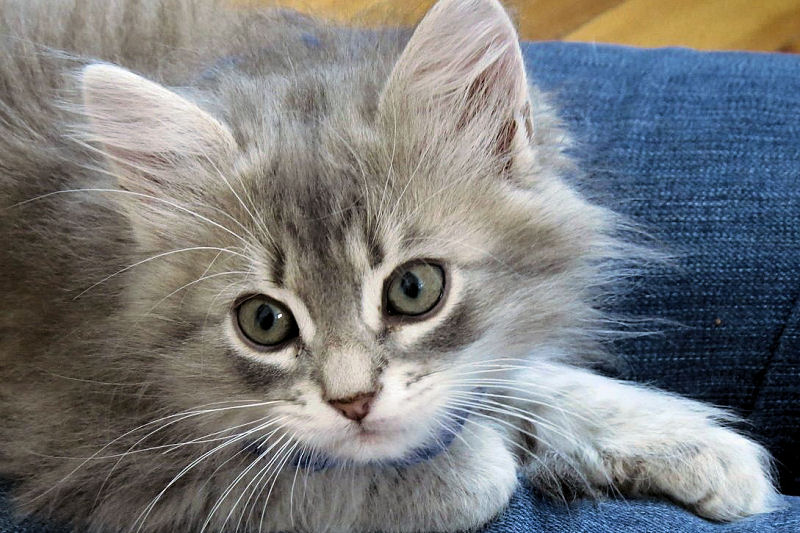 Good Names For Siberian Cats