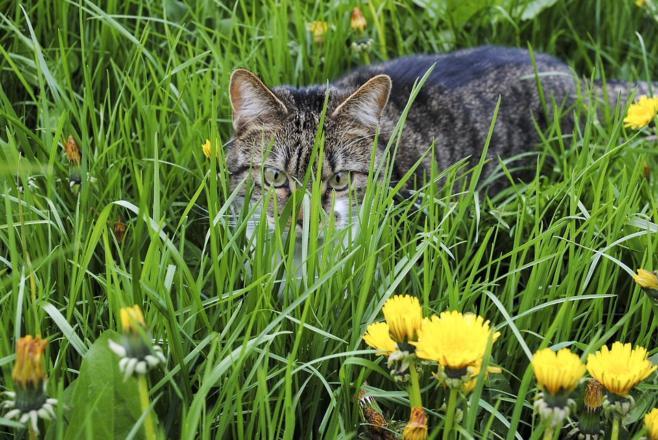 garden herbs beneficial to your cat the purrington post. Black Bedroom Furniture Sets. Home Design Ideas