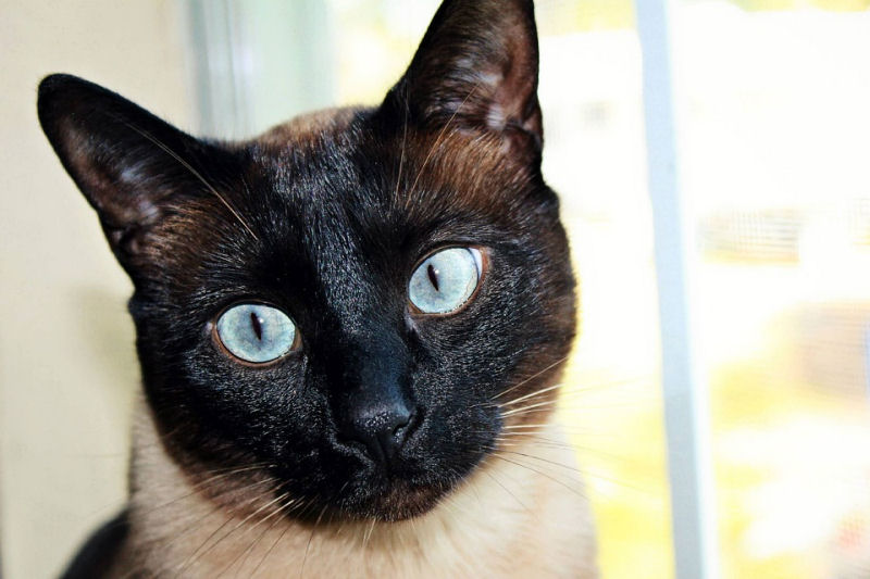 Do Cats Know Where Our Eyes Are