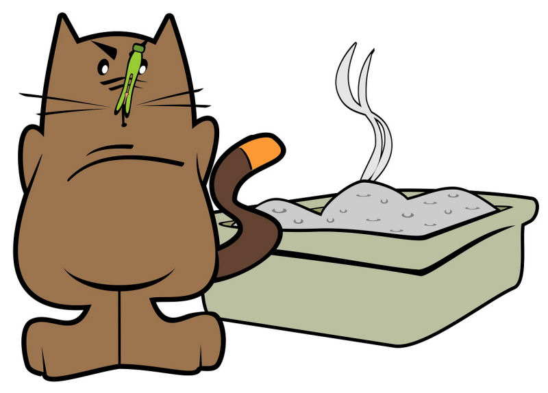 Cat Not Using Litter Box? Try This! - The Purrington Post