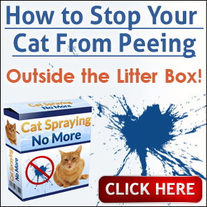 Should Your Cats Sleep With You? - The Purrington Post