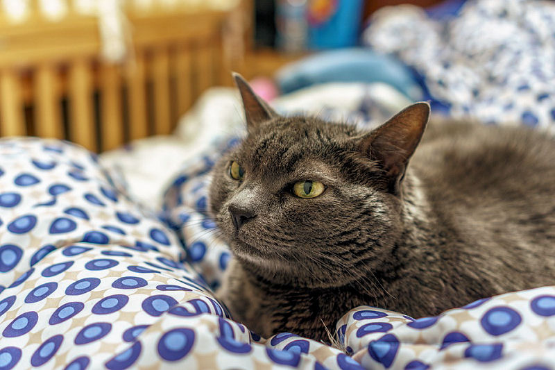 Cool Cat Names - Need Some Inspiration? - The Purrington Post