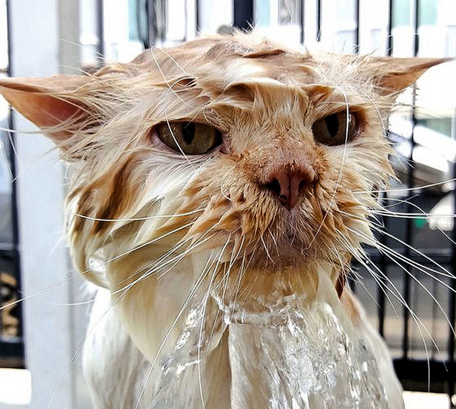 Dehydration Can Be Deadly For Cats