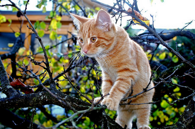 9 Fun Facts About Orange Tabby Cats - The Purrington Post