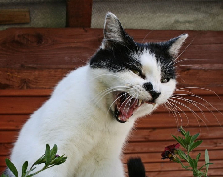11 Cat Sounds - And What They Mean! - The Purrington Post