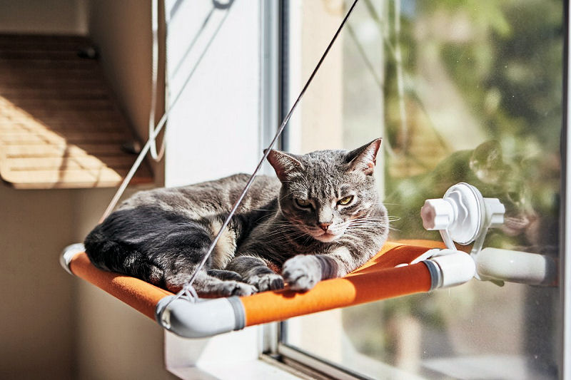 our cats love it u2026and it u0027s easily movable to other windows should you cat demand more than one viewing portal  the hammock fabric  es in either orange or     purrlala  a cat bed and window perch   the purrington post  rh   thepurringtonpost
