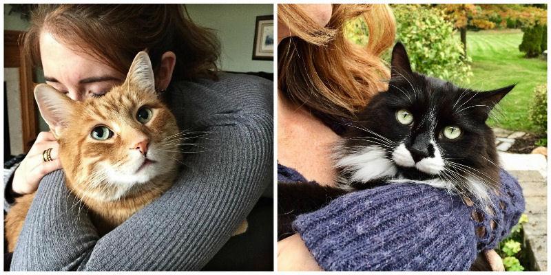 The Pawsome Power of Cat Cuddling - The Purrington Post