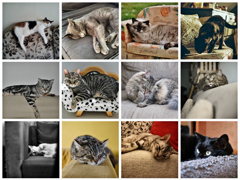 These Natural Enemies Can Now Co Exist Peacefully The Balance Has Been Red Cats Are Hy Homeowners Couches