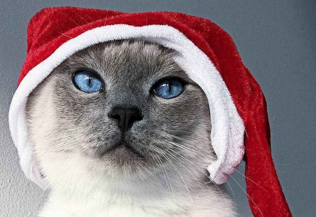Join the Cat Safe Holiday Campaign - The Purrington Post