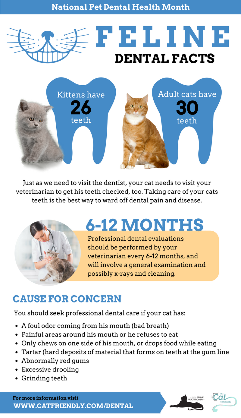 Best Tooth Care For Dogs