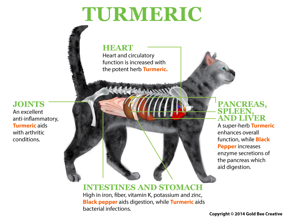 Turmeric for Cats - The Purrington Post