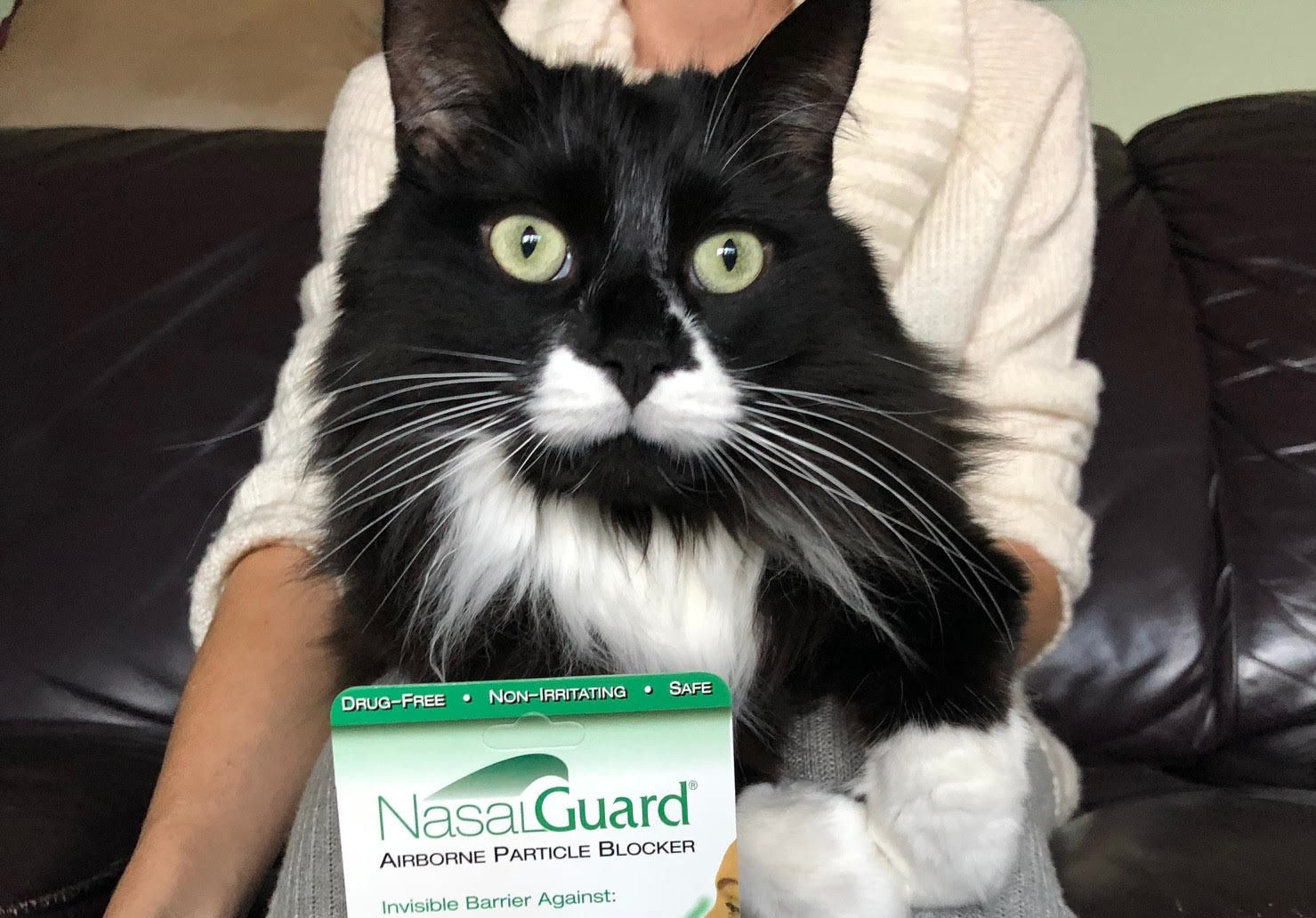 A New Way To Combat Cat Allergies The Purrington Post