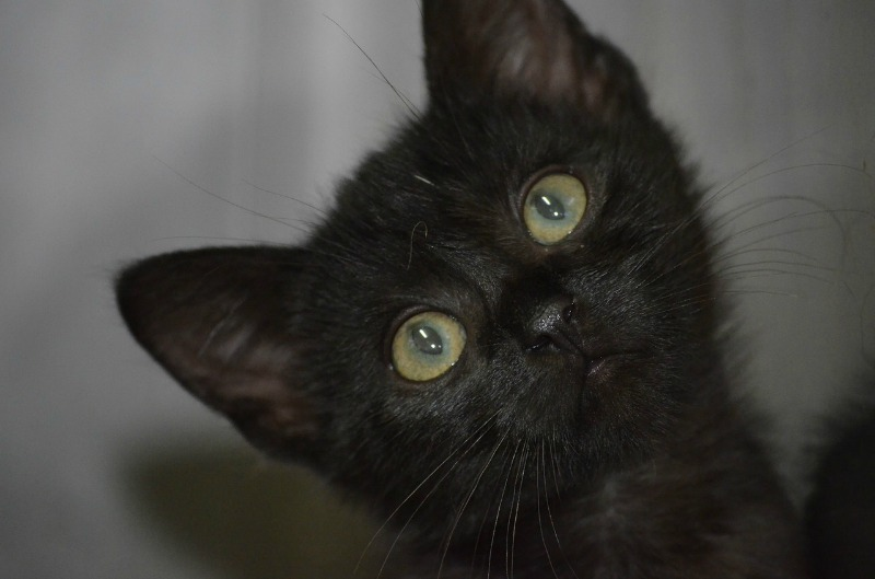 Celebrating the Beauty of Black Cats - The Purrington Post