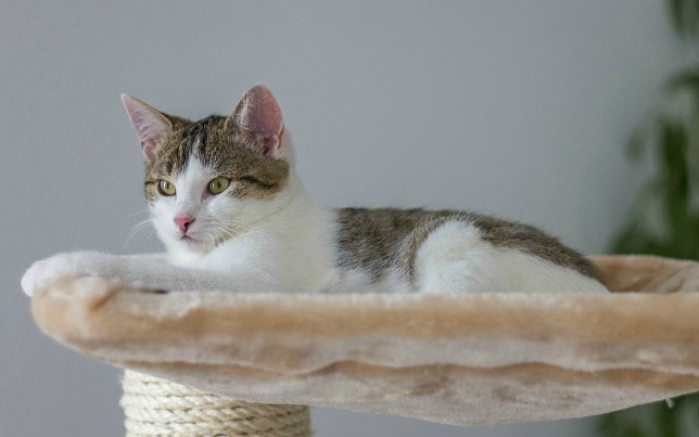 Ideas To Design And Organize A Cat Room The Purrington Post