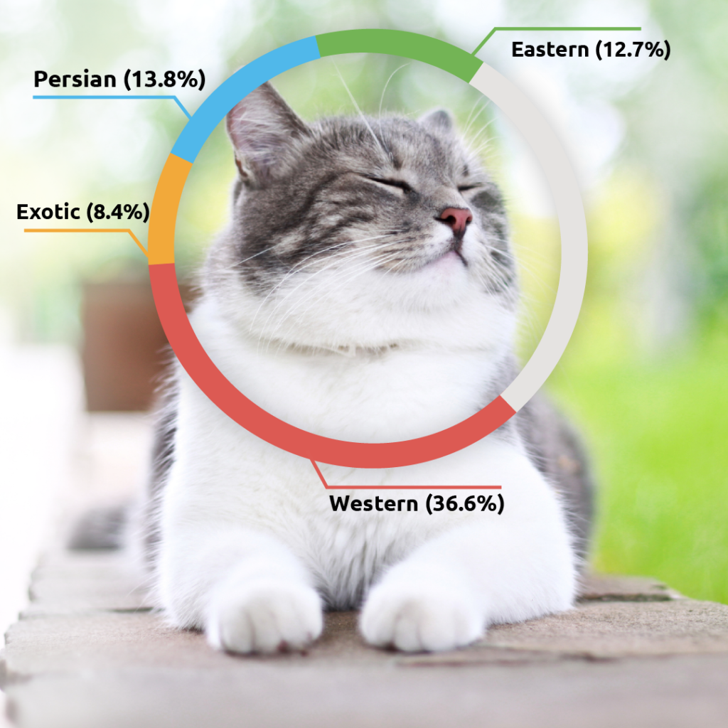Basepaws - Get to know your cat, inside and out